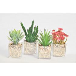 Kaktus ve skle s kamínky střední