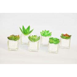 Kaktus ve skle s kamínky malý